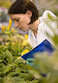 Photo of a woman in a lab coat inspecting plants in a greenhouse