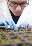 Scientist studying his plant experiment