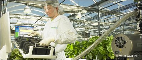 Photo d'une femme travaillant dans une serre où sont cultivées des plantes médicinales