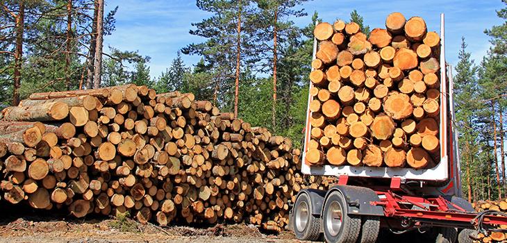 Photo d'un camion transportant des billots de bois dans une forêt