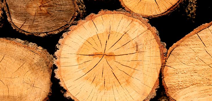 Photo de billots de bois