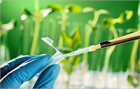 Photo d'un scientifique examinant un échantillon de plante